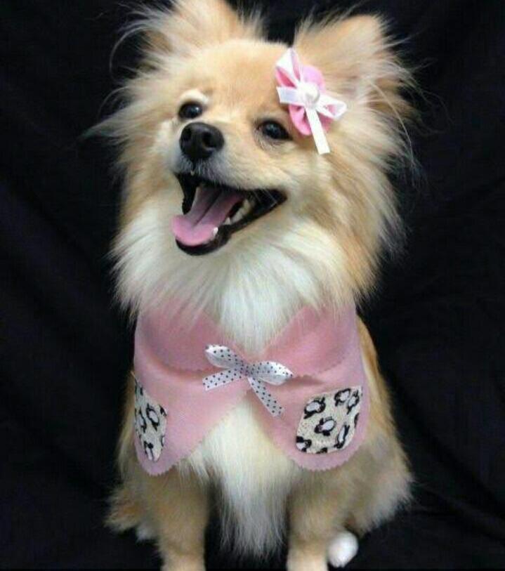 Pet Shop Show Dog